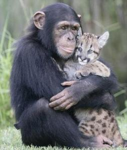 monkey-loves-cat1